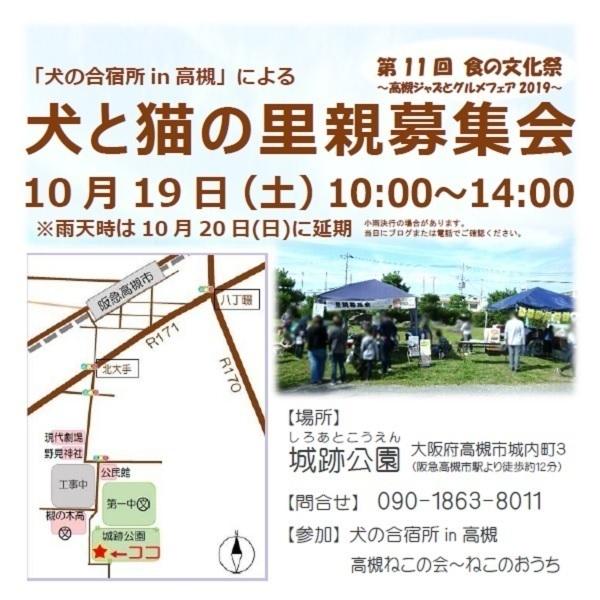 犬の合宿所2019.10.19チラシ.JPG