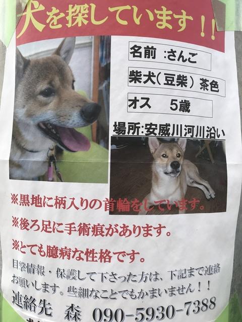 迷い犬さんごちゃん.JPG