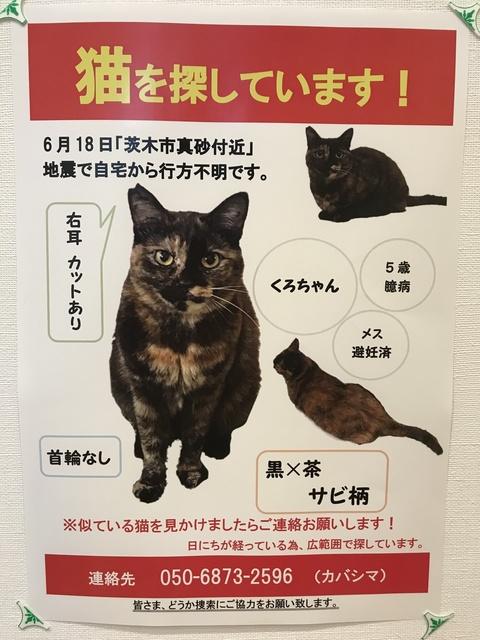 迷い猫.JPG