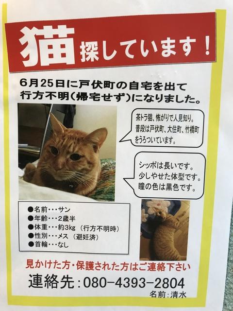 迷子猫 サンちゃん.JPG
